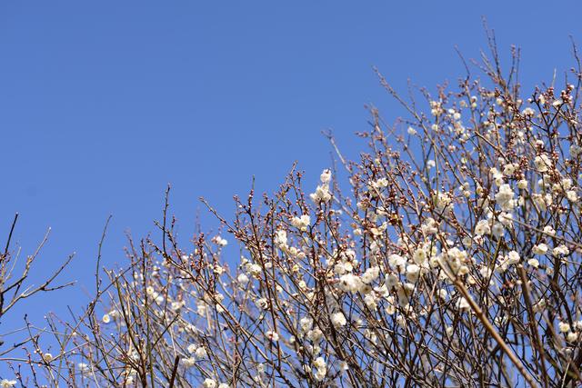 では 春 の 上 暦