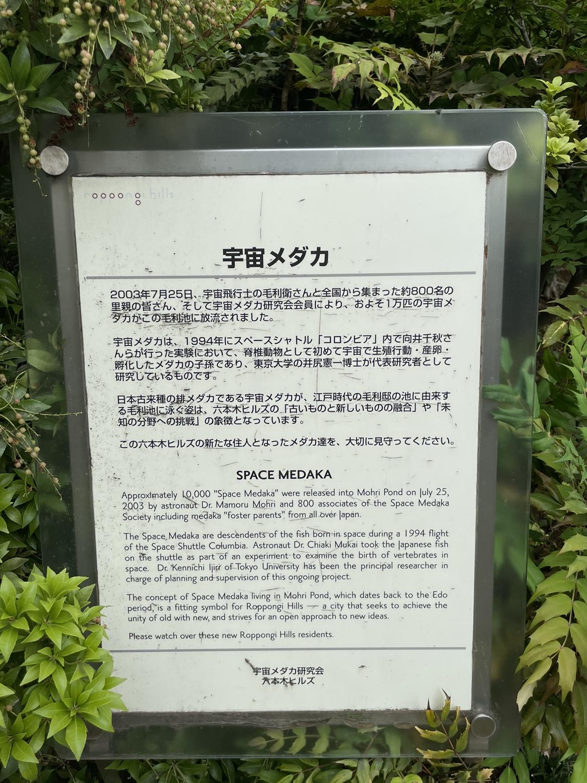 瓢喜,西麻布,六本木,六本木ヒルズ,宇宙メダカ,毛利庭園